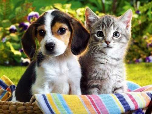 Esterilización o castración de tu perro o gato desde 89€